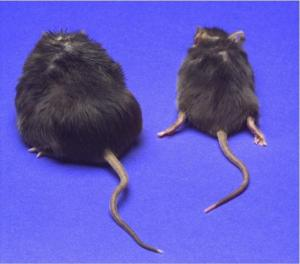 Photo source: www.sciencedaily.com (Credit: Johns Hopkins Medicine)